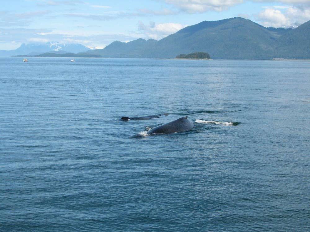 Alaska - Whale Watching